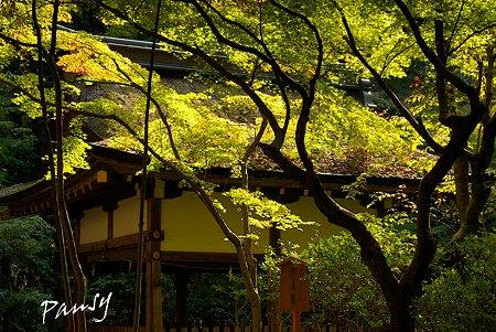 上賀茂神社にて・・7