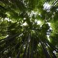 Photos: 竹林の道