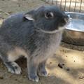 子ウサギさん
