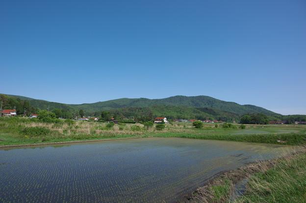 写真: 初夏の八幡高原