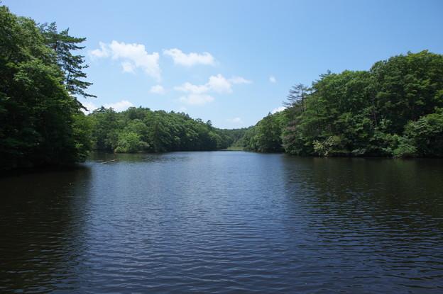 鯉が窪池の風景
