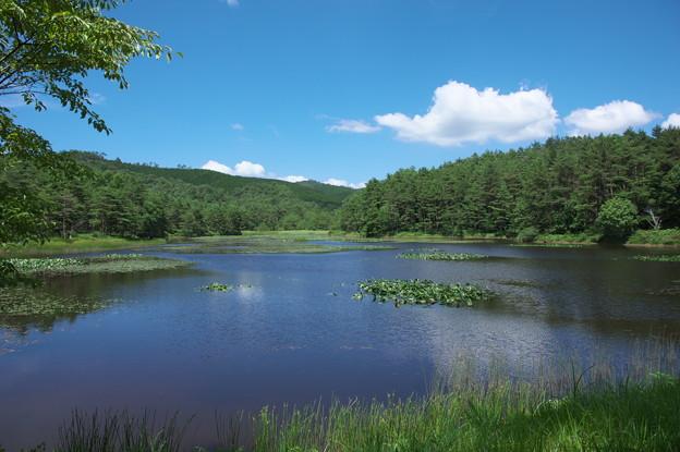 写真: 尾崎沼の風景