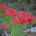 赤色の秋(1)