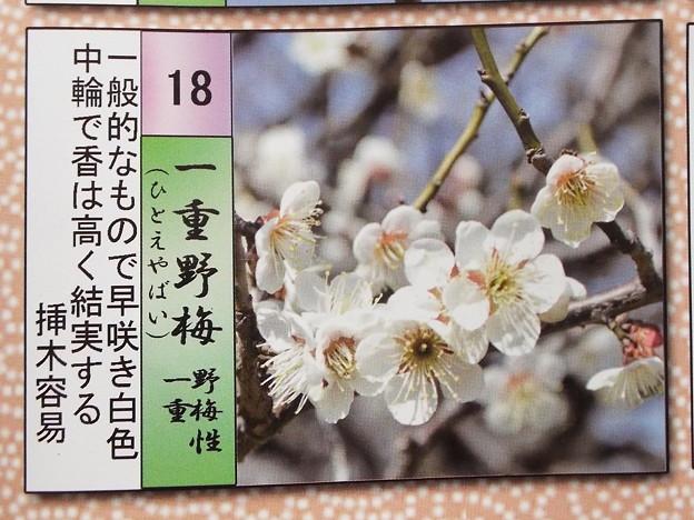 2015_0221花小金井一重野梅016