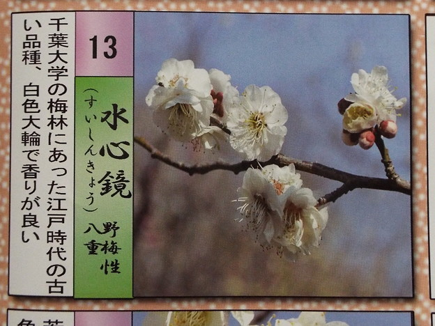 2015_0221花小金井水心鏡012