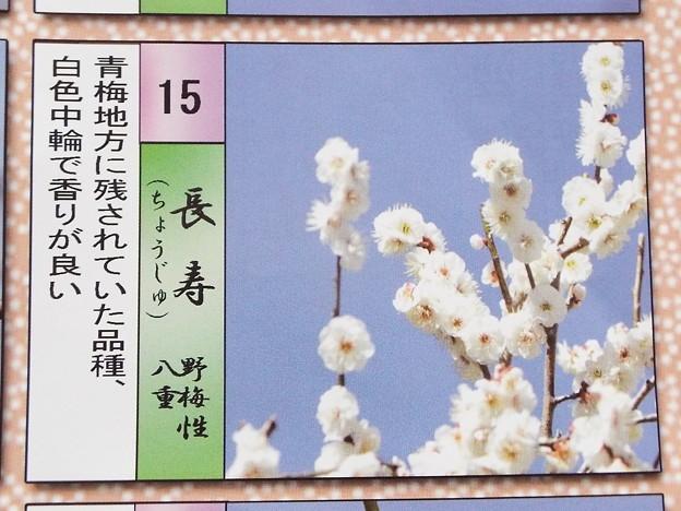 2015_0221花小金井長寿013