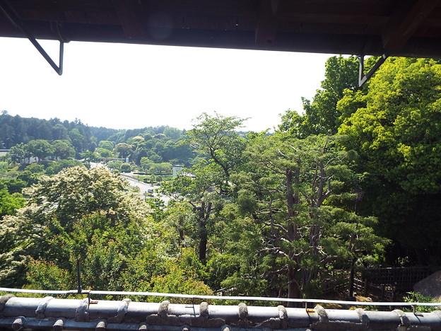 写真: 1705220046寿楽楼カラ桜山視界阻害樹