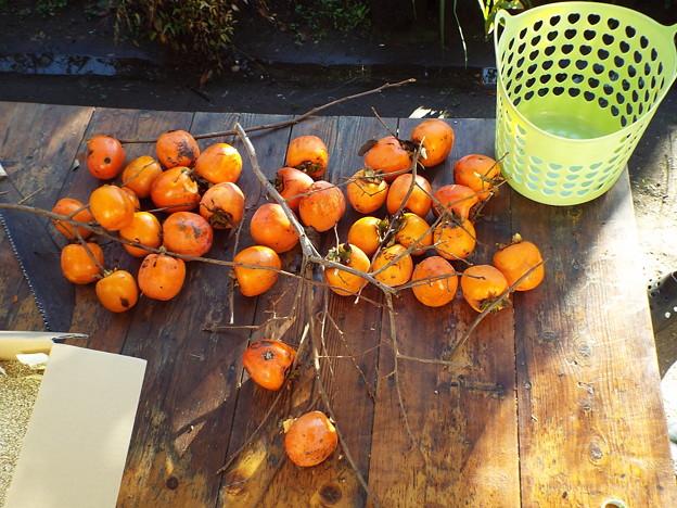 柿収穫1711230001