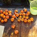 写真: 柿収穫1711230001