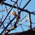 Photos: 八重冬至@鹿嶋神社鳥居1712210006