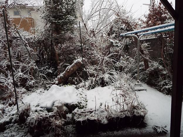 雪夕4時17分1801220004