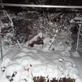 雪夜8時55分1801220006
