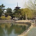 写真: 猿沢の池から五重塔