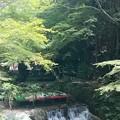 写真: 夏の川床