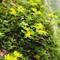 写真: 黄色いお花