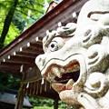 写真: 貴船神社 奥宮の阿形の狛犬
