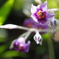 写真: 紫の小さな花‥‥