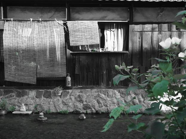 写真: 白川沿いの家