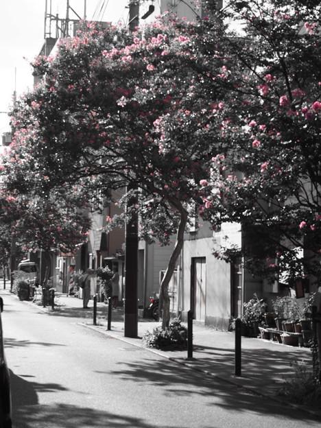ピンクの花の通り