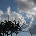台風一過の青空と彼岸花
