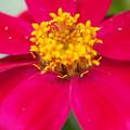 お花の中に小さなお花