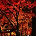紅葉見ナイト