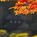 Photos: 銀閣寺にて3