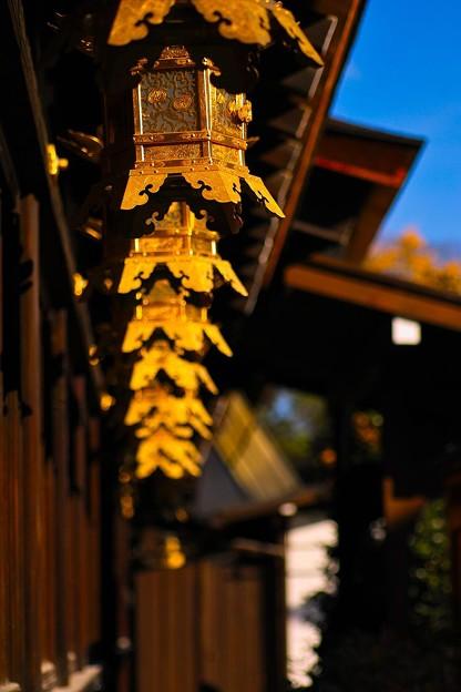 Photos: 下鴨神社