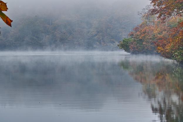 写真: 朝霧の茶屋池探勝林