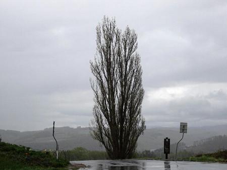 170516-05ケンメリの木