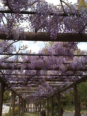 2010年04月30日渋川公園03