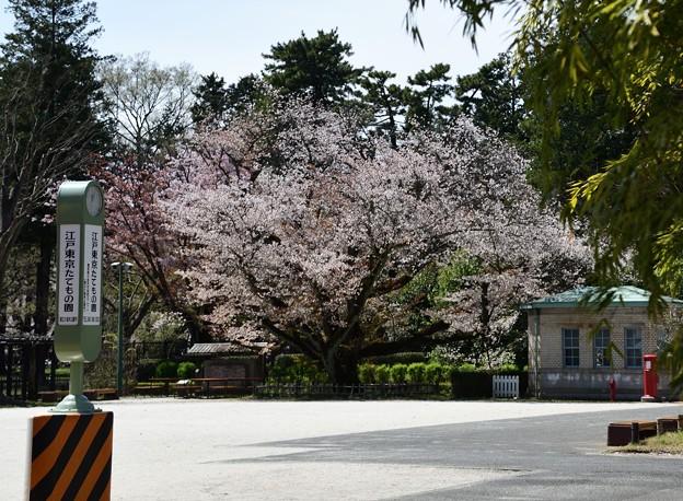 停車場と桜と交番と丸ポスト