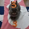写真: うさぎのポロリの誕生日