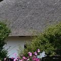 秋桜が似合う古民家屋根どっしり