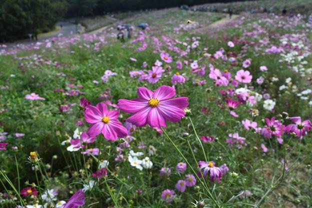 花の丘のツインズ