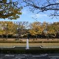 カナールの銀杏並木2