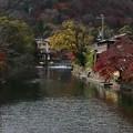 写真: 紅葉とちらつく雪の嵐山