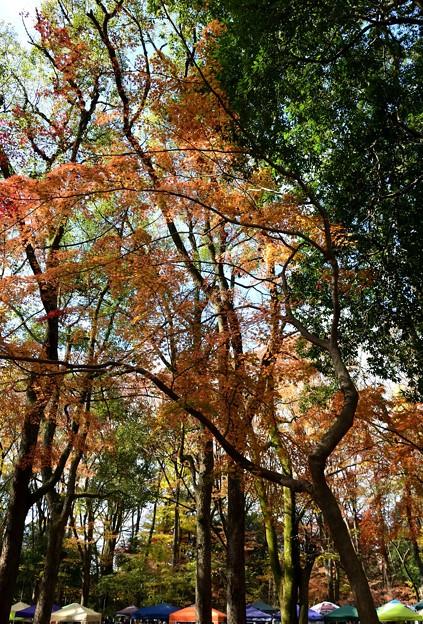 写真: 幽玄な糺の森にテント群