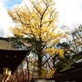 写真: 河合神社