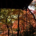 写真: 建物と紅葉