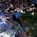 写真: 金魚のいる池に映る木と散紅葉