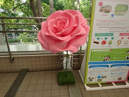 IMG_20170528_132314