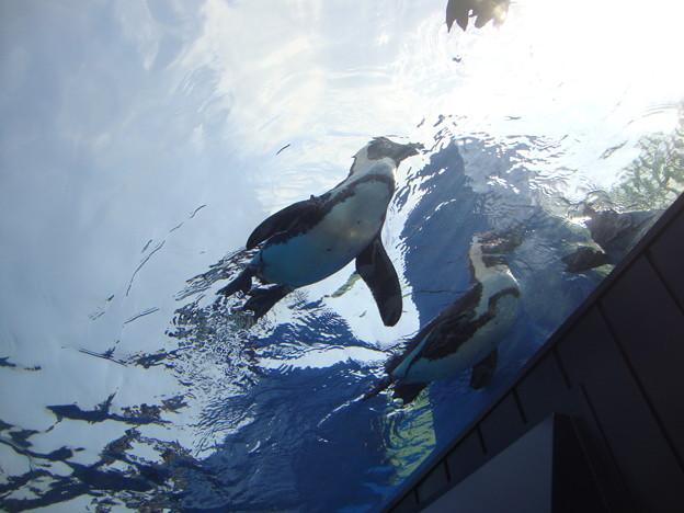 天空のペンギン3