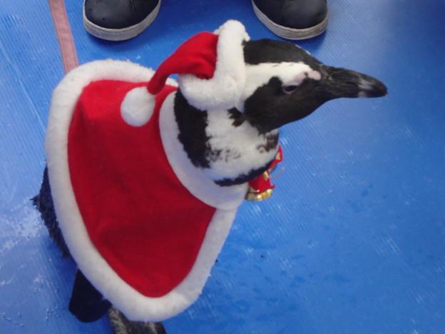 メリークリスマスペンギン2