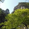 14 覚円峰 お猿さんの横顔