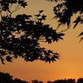 写真: '13紅葉狩 夕暮れ時