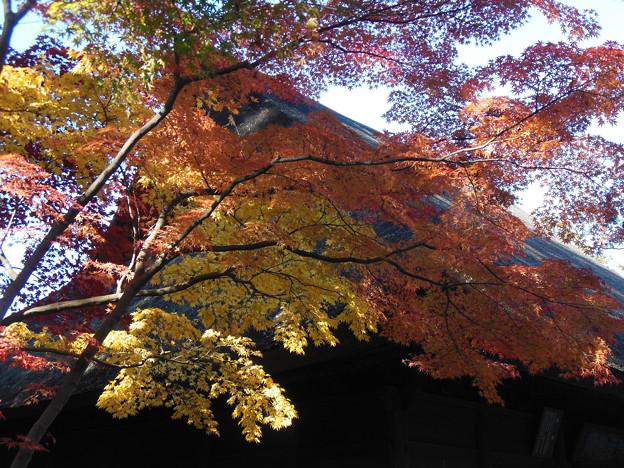 '14紅葉狩 武蔵野の秋景色