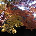 写真: '14紅葉狩 武蔵野の秋景色