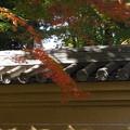 '13紅葉狩 枝ぶり