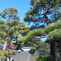 写真: 松と石垣